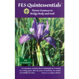 FES Quintessentials brochure