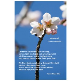 Flower Photo Print - Almond