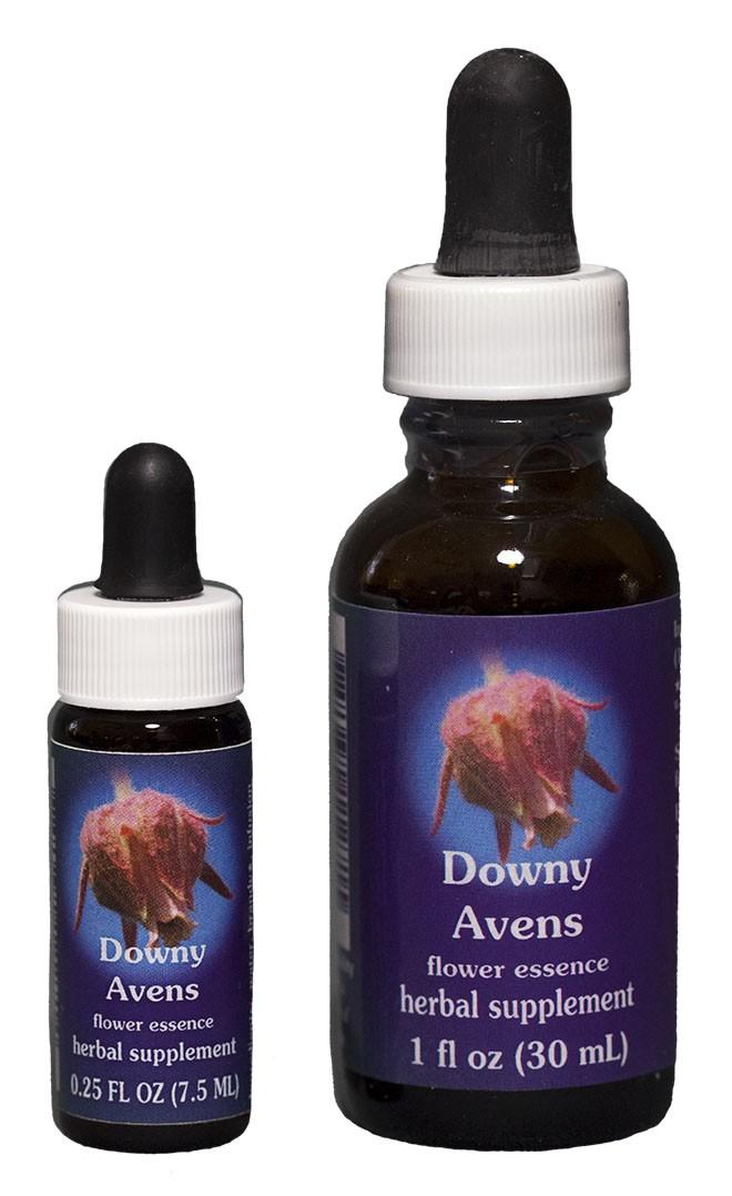 Downy Avens