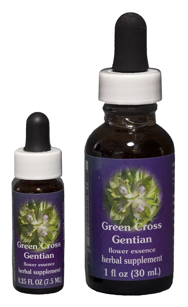 Green Cross Gentian