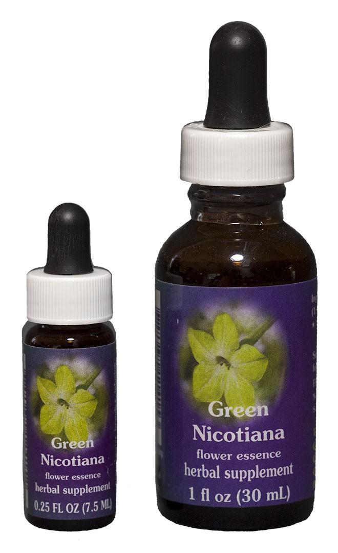 Green Nicotiana