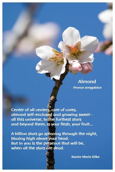 Flower Photo Print - Almond