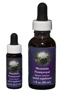 Mountain Pennyroyal