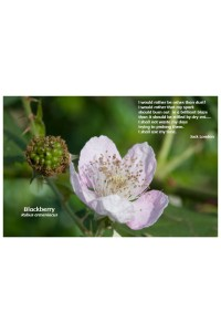 Flower Photo Print - Blackberry