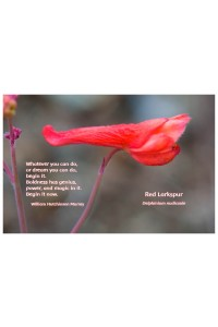 Flower Photo Print - Red Larkspur