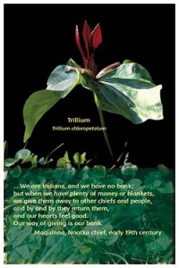 Flower Photo Print - Trillium