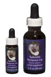 Splendid Mariposa Lily