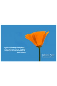 Flower Photo Print - California Poppy