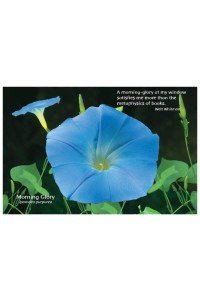 Flower Photo Print - Morning Glory