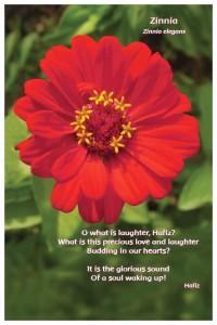 Flower Photo Print - Zinnia