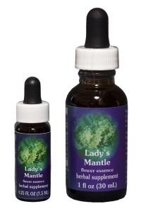 Lady's Mantle (Alchemilla)