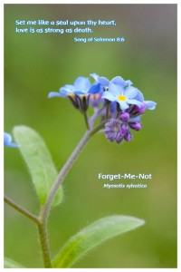 Flower Photo Print - Forget-Me-Not