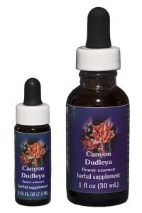 Canyon Dudleya