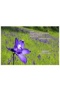 Flower Photo Print - Larkspur