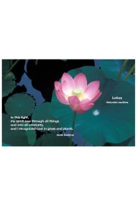 Flower Photo Print - Lotus
